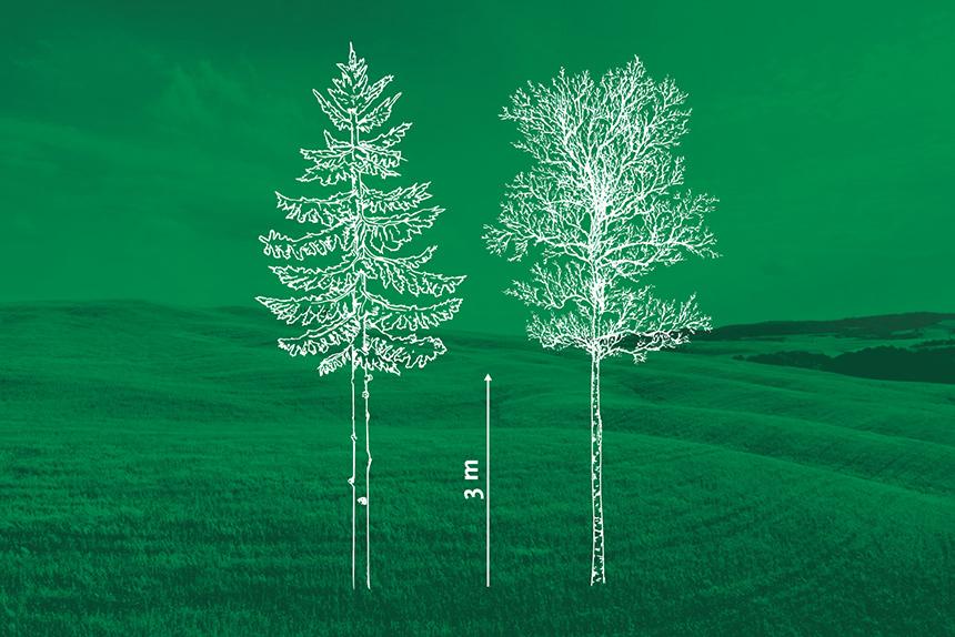 Kasvavate puude laasimine. Läänemaa Metsaühistu